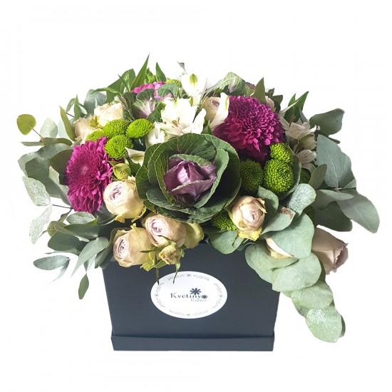 Květinový box fialová Brasica