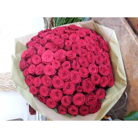 100 Růží Rhodos  60cm