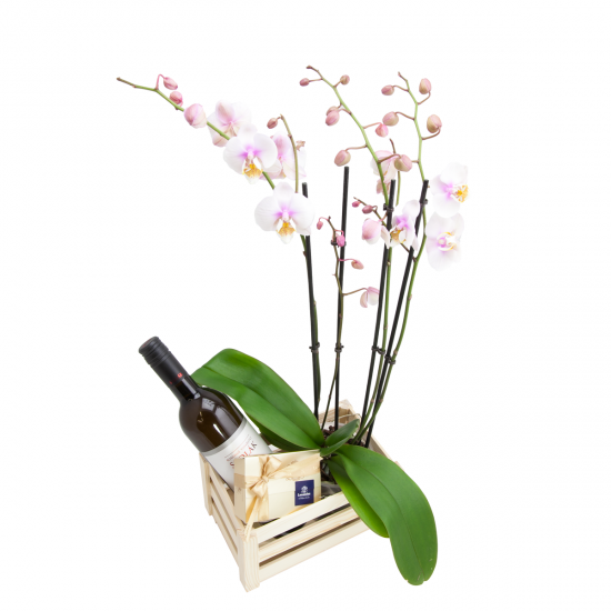 Dřevěná bedýnka Phalaenopsis