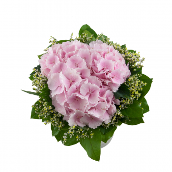 Flower bouquet Hydrangea - Limonium