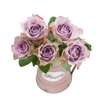 Růže fialová medium