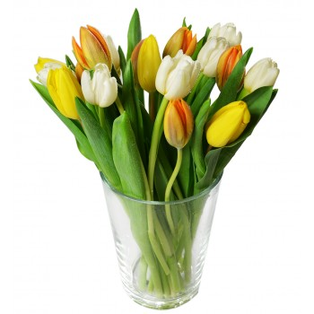 Tulips mix - offer of the day :-)