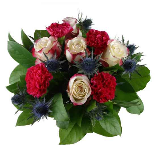 Růže Malibu v bodláčí