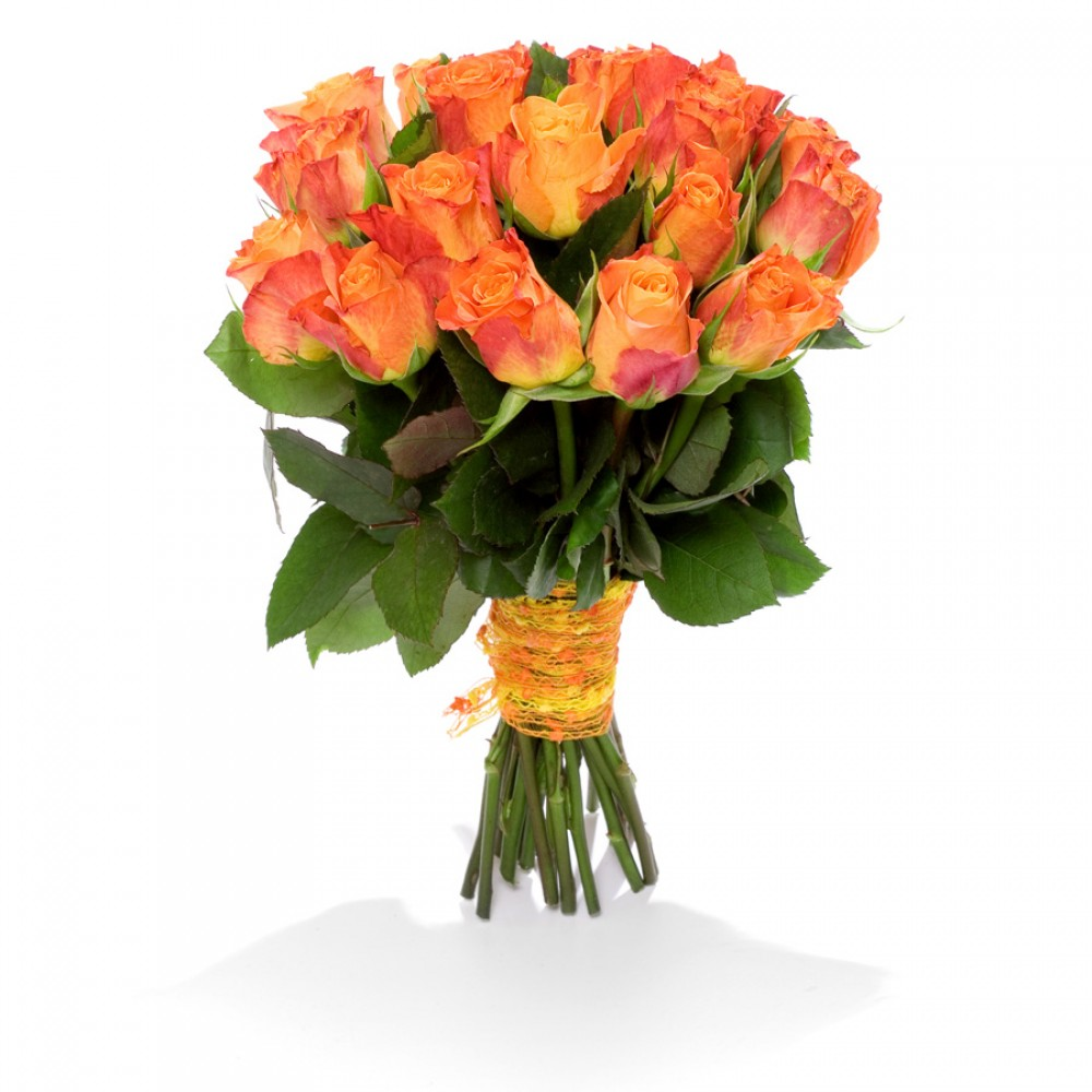 Fiery rose beautiful orange color and beautiful rose blossom maria fiery rose izmirmasajfo