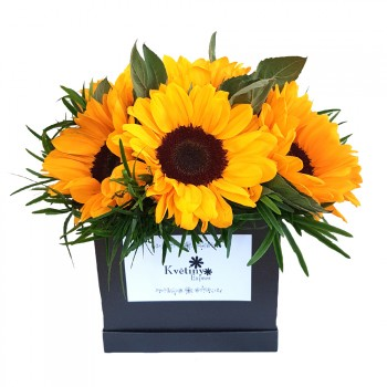 Flower box Helianthus