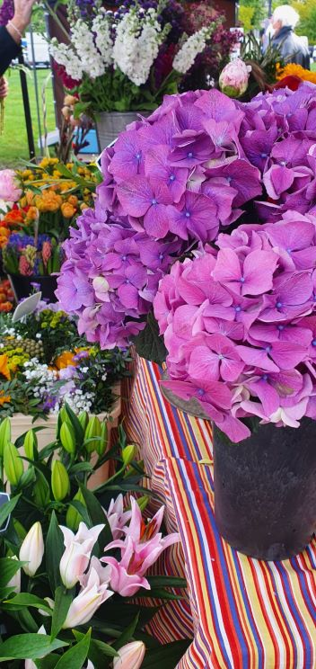 trhy na Kulataku Hortenzie